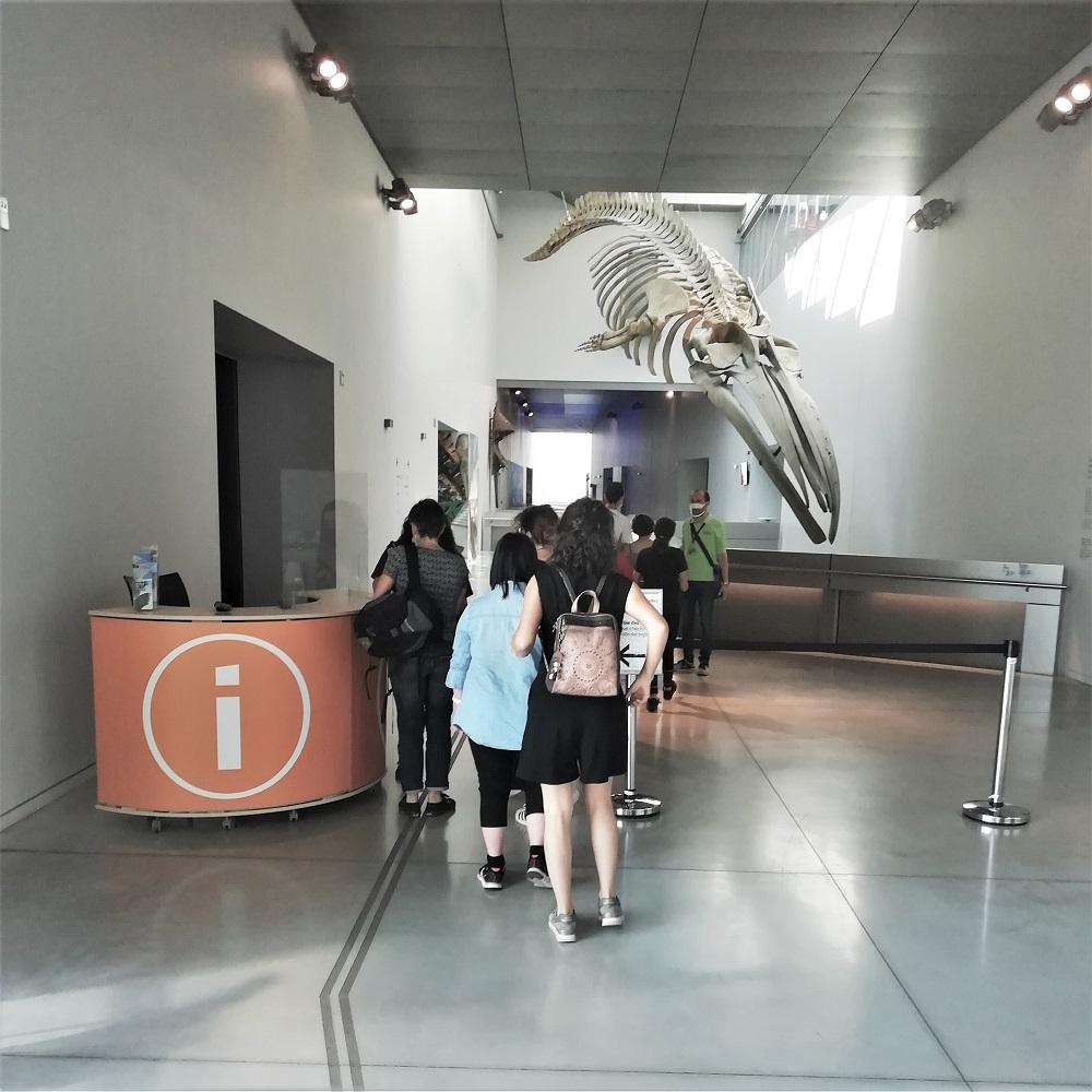 Musée des Confluences - accueil musée et culture -marianne international.